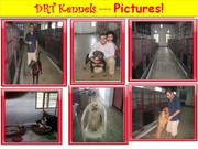 DOGS KENNEL IN MUMBAI - DRT KENNELS