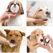 Pet Clinic in Gurgaon with Best Offers