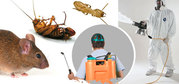 Pest control services for Termites