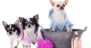 Dog grooming in Bangalore