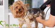 Dog Grooming Services: Dog Groomers in Jaipur - Mr n Mrs Pet