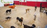 Dog Boarding Services: Dog Hostel in Jaipur - Mr n Mrs Pet