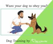 Dog Training Services: Dog Trainers in Jodhpur - Mr n Mrs Pet