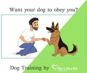 Dog Training Services: Dog Trainers in Kota - Mr n Mrs Pet