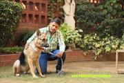 Best Pet BACH FLOWER REMEDY in South Delhi