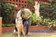 Best ENERGY/REIKI HEALING For Dog in South Delhi