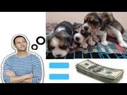 Best 5 Pet Businesses to Start Today-Entrepreneur